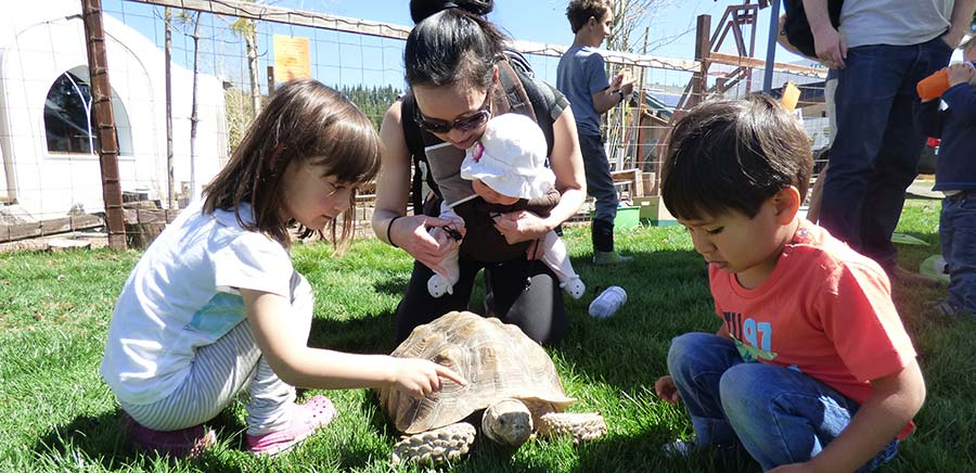 girl petting a turtle while a boy and mom watch at the KidZone Museum